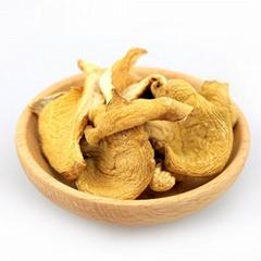 Yuan mushroom