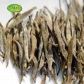 2020 new tea Junshan si  er needle tea super yellow tea 4