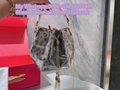 Top aaaaa quality Bvlagri handbags wholesale Bvlagri bags best price