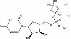 High quality Uridine-5'-triphosphate trisodium salt(UTP-Na3) CAS NO.19817-92-6