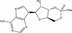 adenosine 3',-5'-cyclic monophosphate sodium salt(cAMP-Na)CAS NO.37839-81-9
