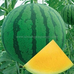 Good quality F1 hybrid yellow watermelon seeds