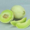 Hybrid F1 honeydew melon seeds for