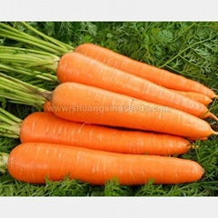 Red carrot Chinese wholesale growing vegetable carrot seeds