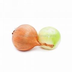 Yellow Onion Seed Four Season Vegetable Seeds