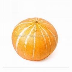 Chinese orange skin and flesh pumpkin seeds