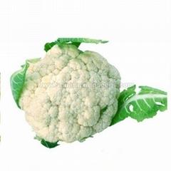 Asian vegetable seeds cauliflower hybrid seed