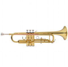 Golden Lacquered Yellow Brass Bb key Student Trumpet