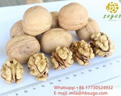 Lion's head walnut kernels