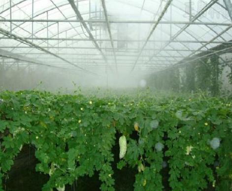 河南蔬菜大棚食用菌大棚加濕噴霧設備 1