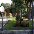 Wire Panel Fencing