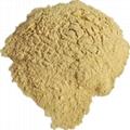 Mycelium protein powder feed raw