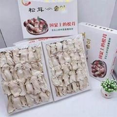 松茸口磨 松茸蘑菇
