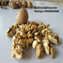 Various Sizes Walnut Kernels Supplier First Quality Walnut Kernel