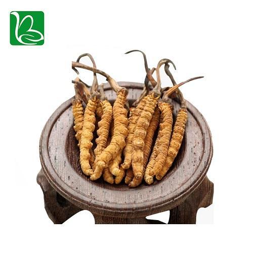 Organic dried cordyceps sinensis caterpillar fungus Keeda Jadi cordyceps root 1