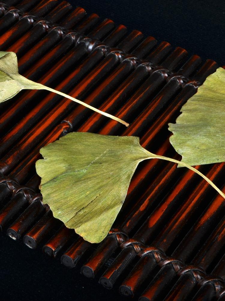 Dried ginkgo leaf for hemiplegia Chinese herbal ginkgo dried leaves  2