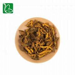 Coptis chinensis rizoma traditional Chinese medicine herbs Rhizoma Coptidis heal