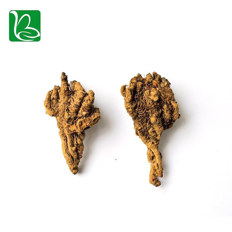 Coptis chinensis rizoma traditional Chinese medicine herbs Rhizoma Coptidis heal 2
