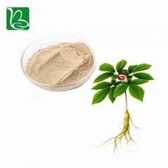 Bulk supply herbal extract ginseng extract ginsenoside for functional beverage