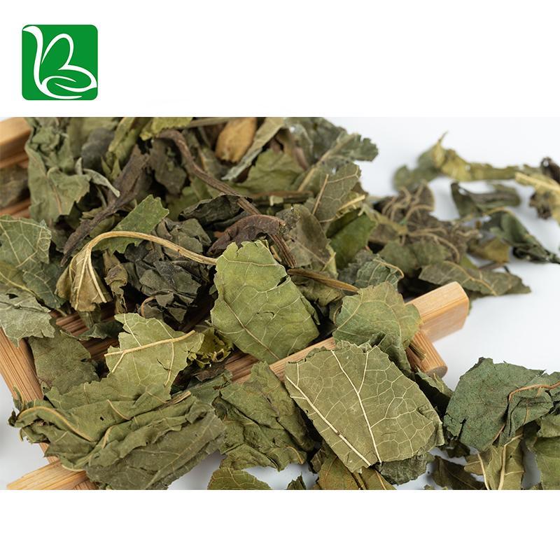 Natural tea herbs white mulberry leaves phenolic tea for health 4
