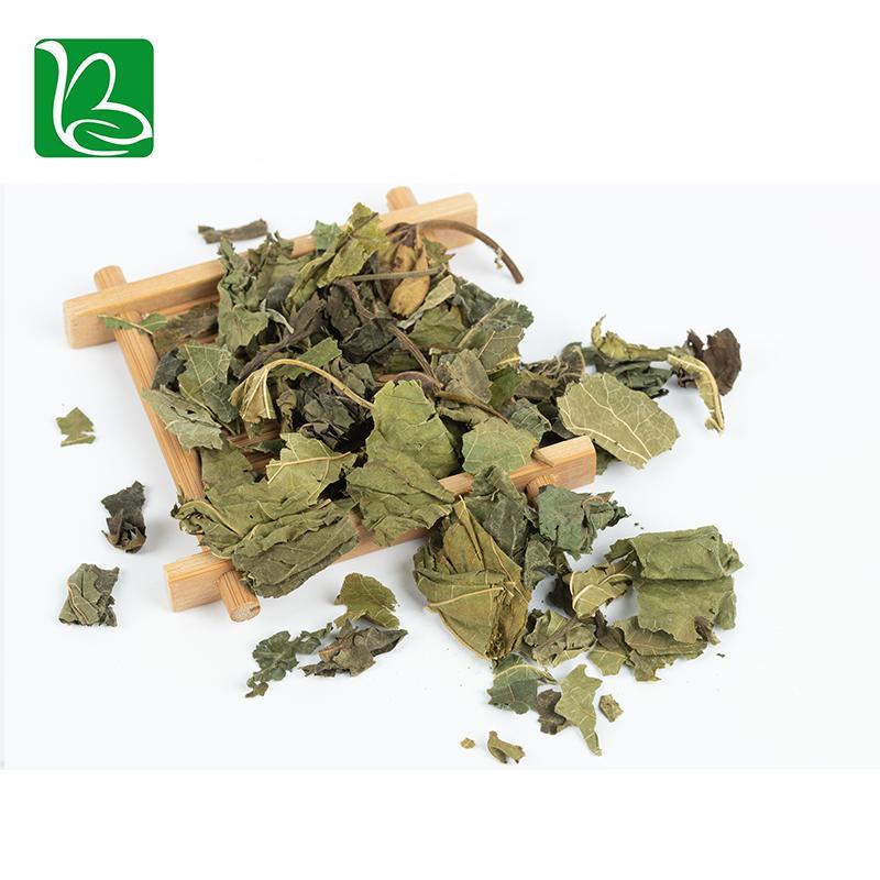 Natural tea herbs white mulberry leaves phenolic tea for health 5