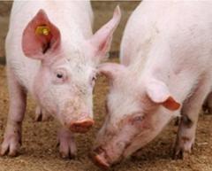 Animal natural crude extract provender Anti-Virus provender