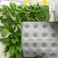 无土栽培育苗海绵 水培蔬菜定植棉 固定育苗基质种植海绵块 4