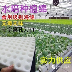无土栽培育苗海绵 水培蔬菜定植棉 固定育苗基质种植海绵块