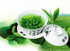 New tea ordinary green tea mountain Fried green tea