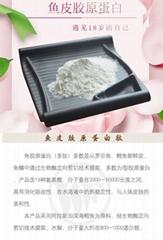 Fish skin collagen powder peptide factory direct wholesale OEM OEM OEM