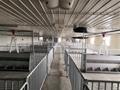 栏位系统育肥大栏 4