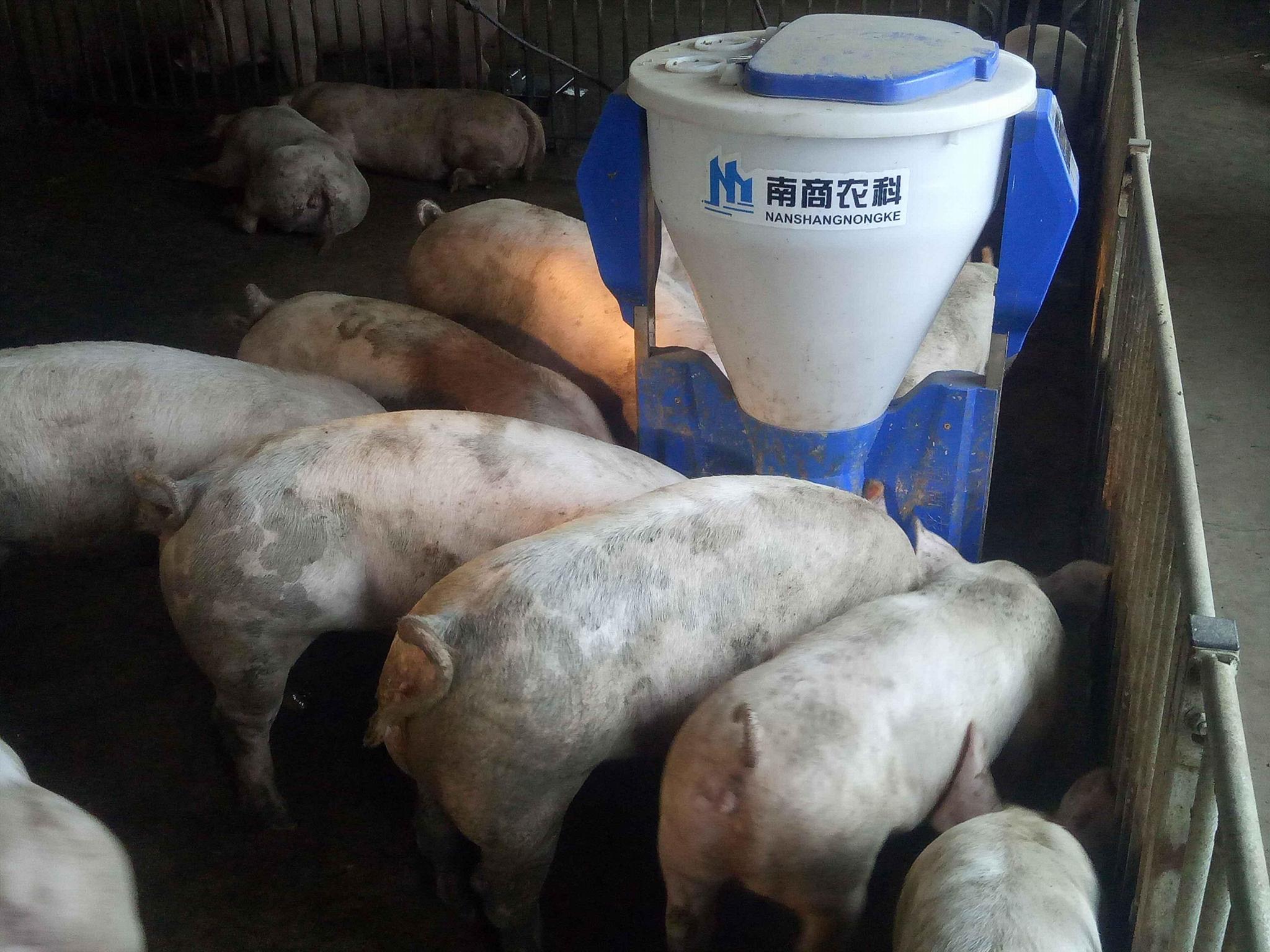 饲喂系统小智倌保育干湿饲喂器 1