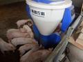 饲喂系统小智倌保育干湿饲喂器 2
