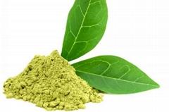 Natural Green Tea Extract