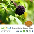 Organic Siberian Ginseng Extract