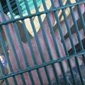 358密纹网,密纹护栏网,密纹隔离网 4