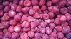 冷冻草莓,速冻草莓,冷冻草莓泥, (热门产品 - 1*)