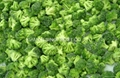 IQF broccoli  (florets/cuts),BQF broccoli (cuts/spears),Frozen broccoli