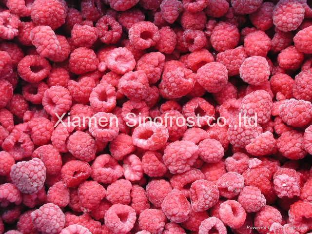IQF Raspberries,Frozen Raspberries,wholes/brokens/crumbles/puree 4