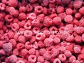 冷凍樹莓,速凍樹莓 9