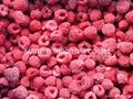 IQF Raspberries,Frozen Raspberry,wholes/brokens/crumbles/puree 9