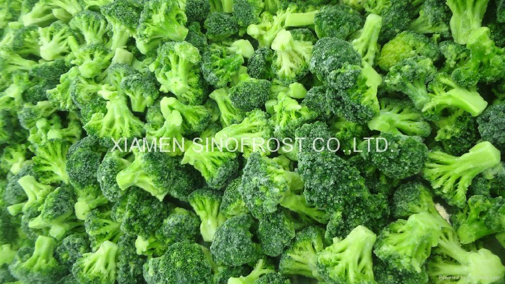 IQF broccoli  (florets/cuts),BQF broccoli (cuts/spears),Frozen broccoli 3