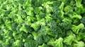 IQF broccoli  (florets/cuts/stalks),BQF broccoli (cuts/spears),Frozen broccoli