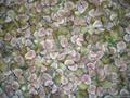 IQF Figs, Frozen Figs,wholes/cuts/ha  es/diced 2