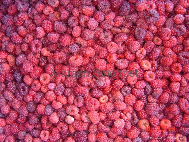 IQF Raspberries,Frozen Raspberries,wholes/brokens/crumbles/puree 6