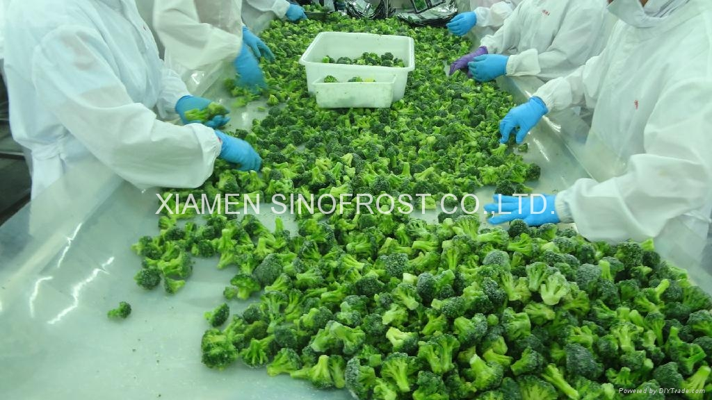 IQF Broccoli Florets,Frozen Broccoli Florets 7