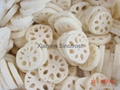 IQF lotus roots,Frozen lotus roots,slices/cuts