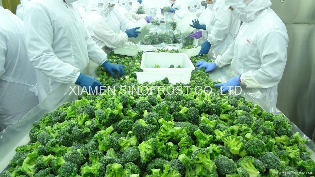 冷凍綠花菜,速凍綠花菜 9