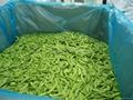 IQF Pea Pods ,IQF Snow Peas,Frozen Pea Pods