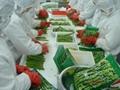 IQF green asparagus, Frozen green asparagus, IQF asparagus, Frozen asparagus